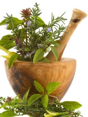giardino aromatico 3