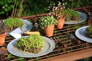 giardino piante aromatiche