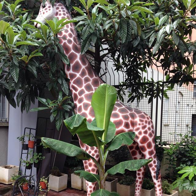 giraffa banano